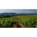 Les vignes de Bernard Duseigneur à Chateauneuf du Pape